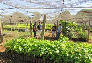 Projeto fortalecerá cadeias produtivas da sociobiodiversidade em Rondônia