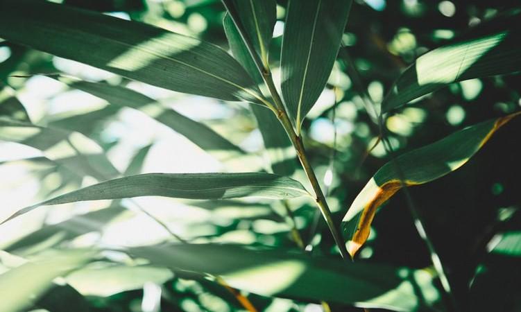 Plataforma Parceiros pela Amazônia seleciona consultoria para realização de estudo sobre Áreas de reserva privadas
