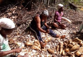BAHIA: BOAS PRÁTICAS DA AGRICULTURA FAMILIAR QUILOMBOLA