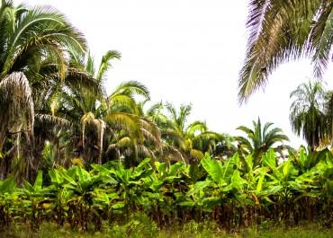 BOAS PRÁTICAS DA AGRICULTURA FAMILIAR  QUILOMBOLA  E A RELAÇÃO COM A MITIGAÇÃO DAS  MUDANÇAS CLIMÁTICAS