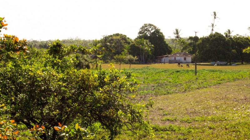 MARANHÃO: BOAS PRÁTICAS DA AGRICULTURA FAMILIAR QUILOMBOLA