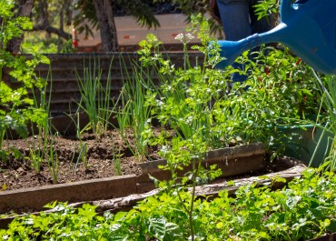 TOCANTINS: BOAS PRÁTICAS DA AGRICULTURA FAMILIAR QUILOMBOLA