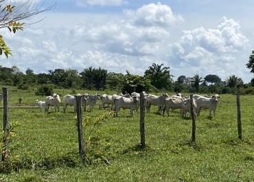 Sai o desmatamento, entram os benefícios na fazenda